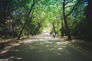 Trees on road - Why green space can boost health and wellbeing