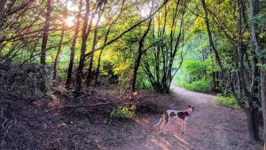 Dog in woods - Why green space can boost health and wellbeing