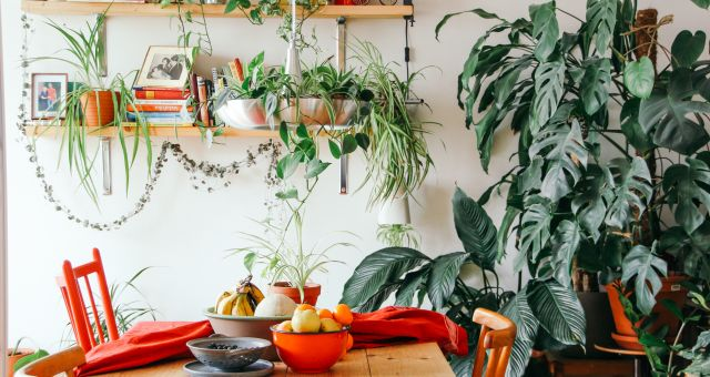 Florals in home - How can biophilic design boost your wellbeing at home