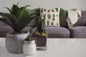 Indoor plants - How can biophilic design boost your wellbeing at home