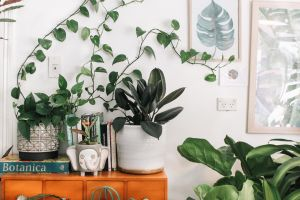 Greenery decor - How can biophilic design boost your wellbeing at home